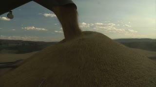 Combine Transfers Wheat