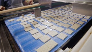 Cookies, biscuits on conveyor. Mechanized production of bakery products