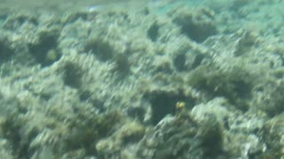 Coral Reef Activities Underwater