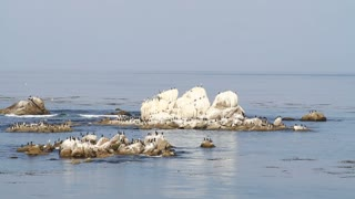 Cormorants Sit On Rocks On Monterey Bay