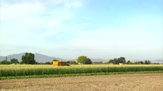 Corn Harvester Moves Through Field