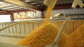 Cornflakes Load Into Container