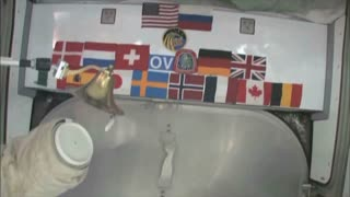 Country Flags on ISS