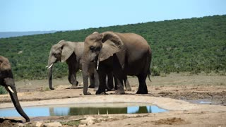 Couple elephants around a small waterpool in Addo Elephant National Park South Africa