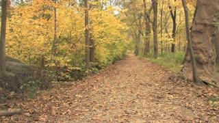 Covered Path in Autumn Woods