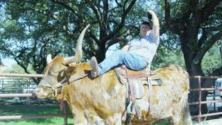 Cowboy Posing on Steer