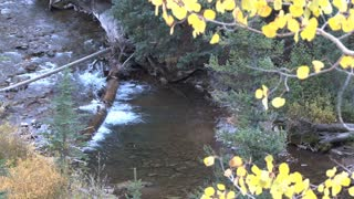 Creek in Autumn 2
