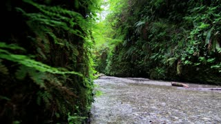 Creek in Fern Canyon