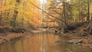 Creek Through Autumn Woods 3