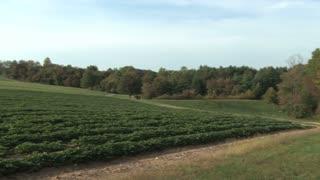 Crops on a Farm