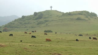 Cross On Hilltop Overlooking Cattle