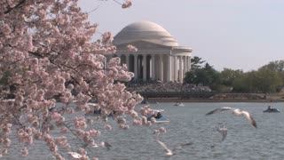 Crowd, Birds, and Cherry Blossoms at the Jefferson Memorial Zoom In
