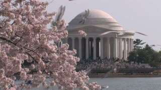 Crowd, Birds, and Cherry Blossoms at the Jefferson Memorial