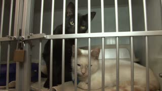 Cute Black and White Cats in Cage at Animal Shelter