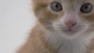 Cute Kitten on White Background - Extreme close up meow
