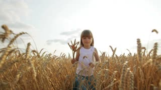 Cute little girl walking through wheat field holding wheat stalks in her hands and smiling