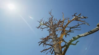 Dead Desert Tree in Hot Sun