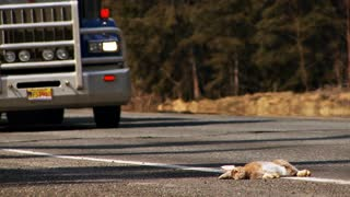 Dead Hare on the Side of the Road