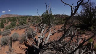 Dead Tree Branches in Desert Landscape