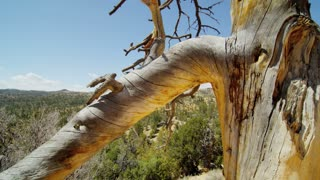 Dead Tree in Front of Utah Landscape