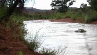 Debris in River Flowing Through Desert
