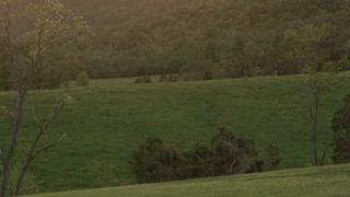 Deer Grazing On Hilltop