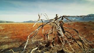 Desert Branch Landscape