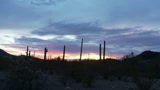Desert Cactus Timelapse