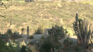 Desert plants and fauna