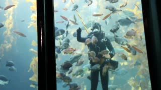 Diver Feeds In Aquarium