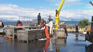Dock Crew Sorting Fish