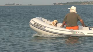 Dog and Man Cruising in Small Speed Boat