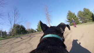Dog's eye view - Running through a park - GoPro First person Angle