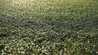 Dolly of a turf grass field with with the sun shining on the surface.