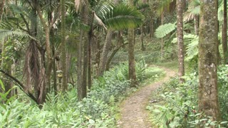 Dominican Republic Forest Path 2