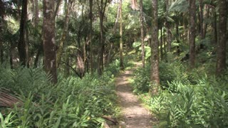 Dominican Republic Forest Path 3