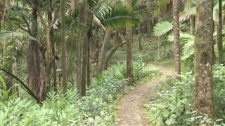 Dominican Republic Forest Path 4