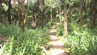Dominican Republic Forest Path