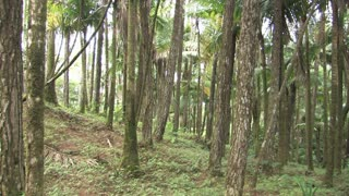 Dominican Republic Tropical Forest 2