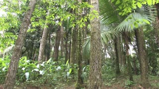Dominican Republic Tropical Forest 3