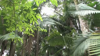 Dominican Republic Tropical Forest 4
