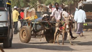 Donkey Carts On Busy Ethiopian Street