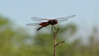 Dragonfly 04