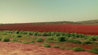 Driving Past Strip of Greenery and Red Field 5