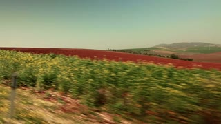 Driving Past Strip of Greenery and Red Field 6