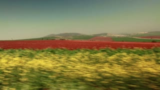 Driving Past Strip of Greenery and Red Field 7