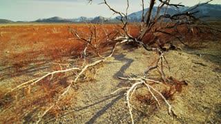 Dry Barren Landscape