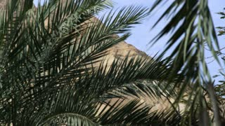 Dry Mountain Through Palm Fronds