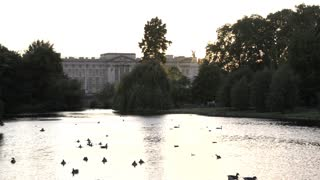 Ducks on Pond in St James Park with Buckingham Palace in the Distance
