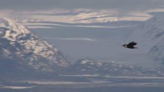 Eagle Soaring Across Landscape